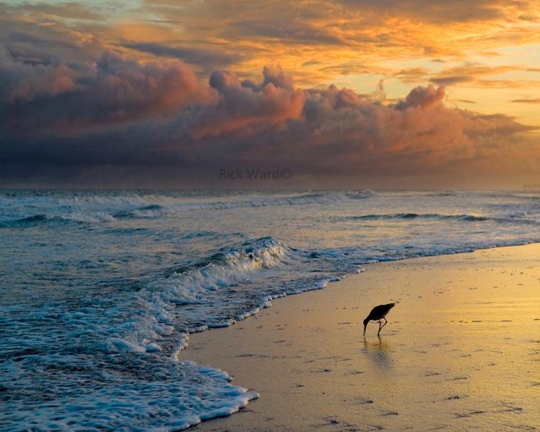 Beach Sunset 24 X 30 in.