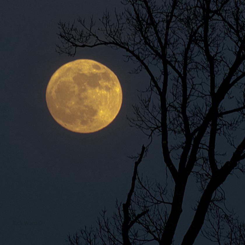 Full Moon 14X14 in.