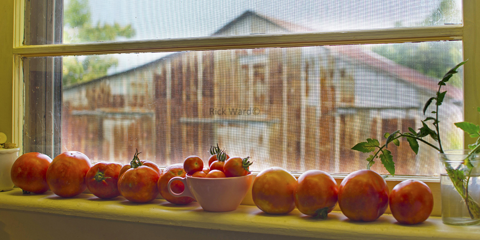 Tomatoes 16 X 32 in.