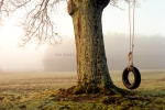 Tree Swing  20 X 30 in.